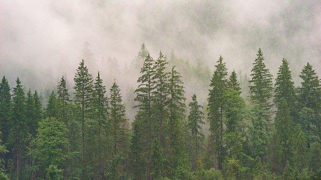 Promenons-nous dans les bois…..